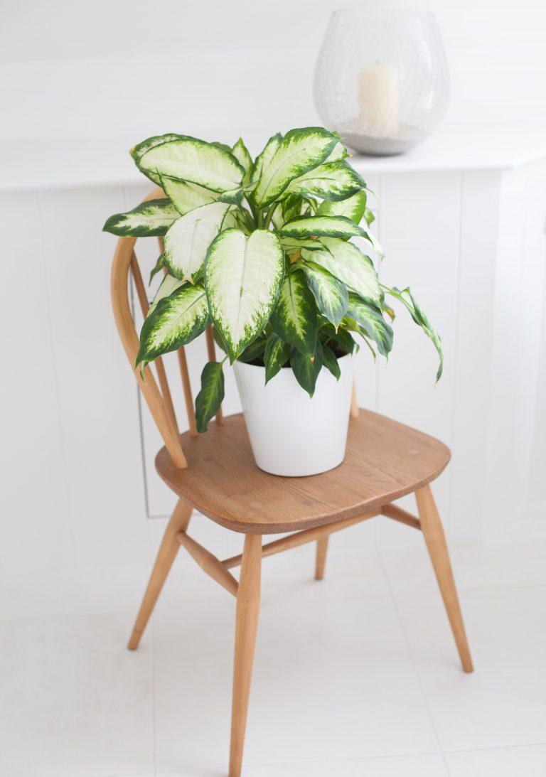 Vintage Ercol Chair